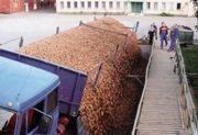 Stanowisko rozładunku ziemniaków